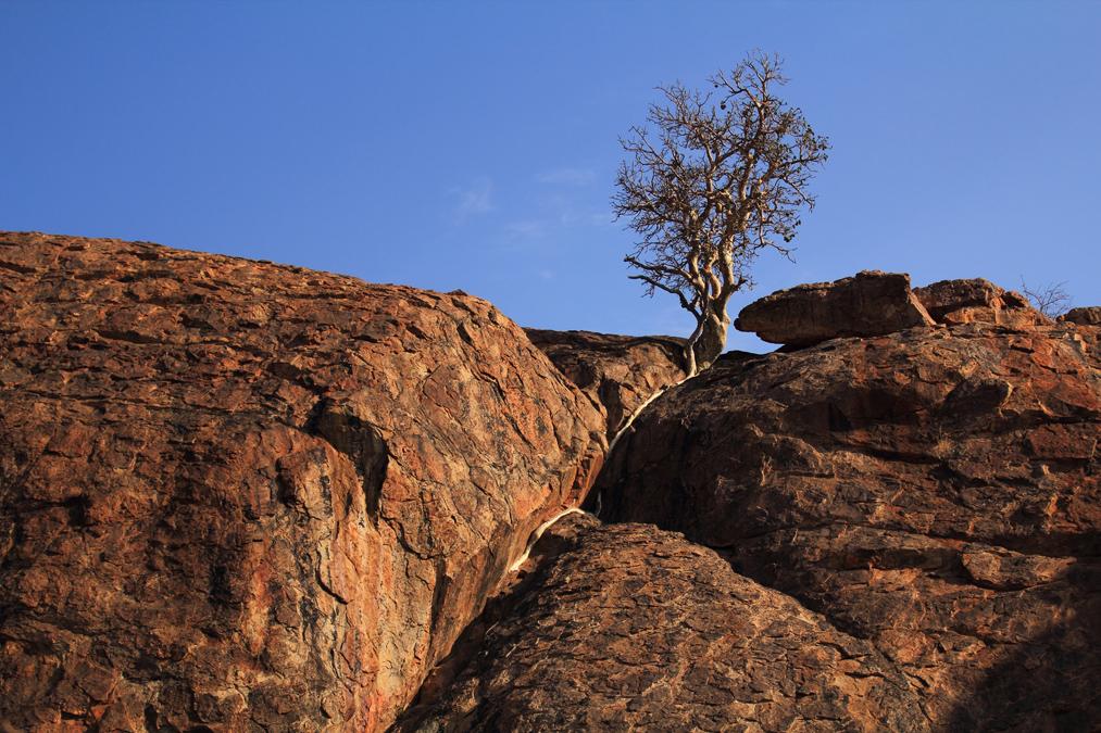 Mapungubwe National Park en Afrique du Sud