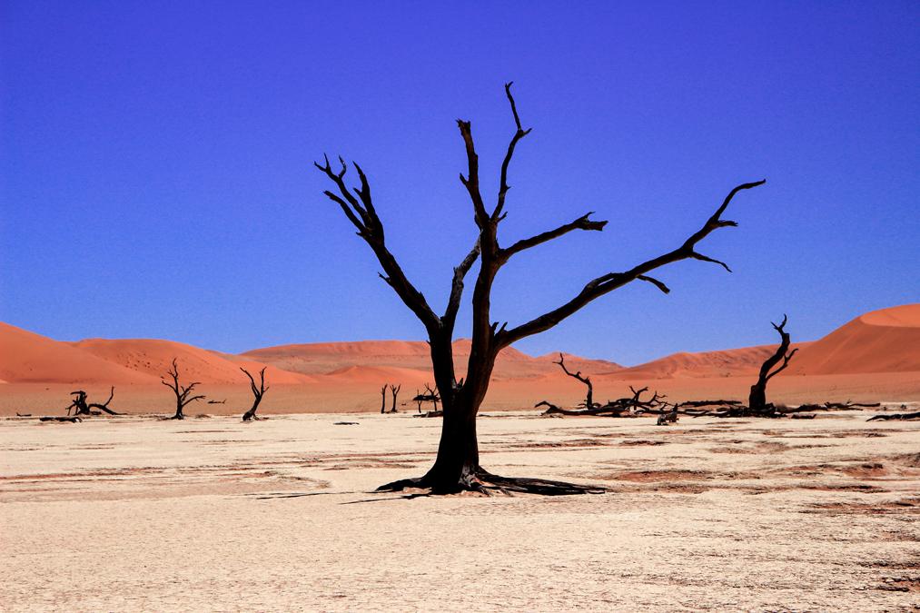 Dead Vlei à Sossusvlei en Namibie