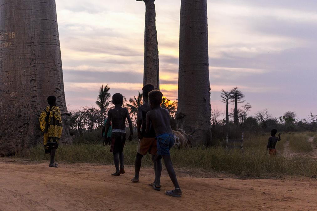 Allée des baobabs à Madagascar