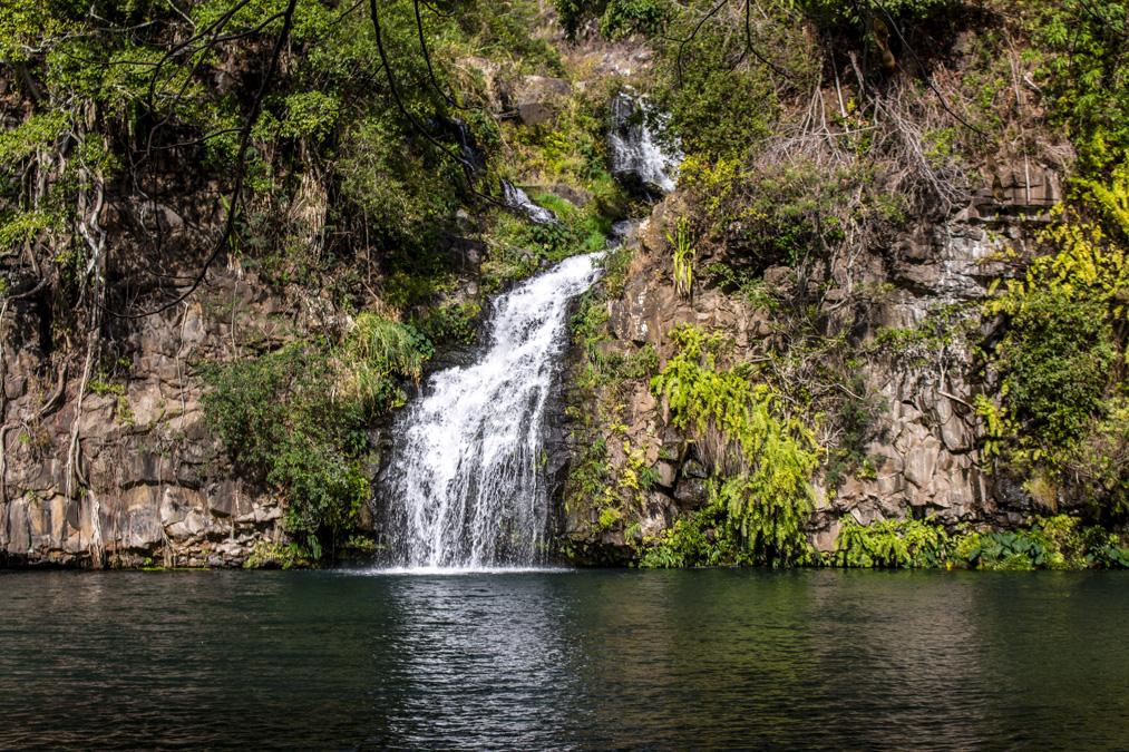 Bassin Cormoran à la Réunion