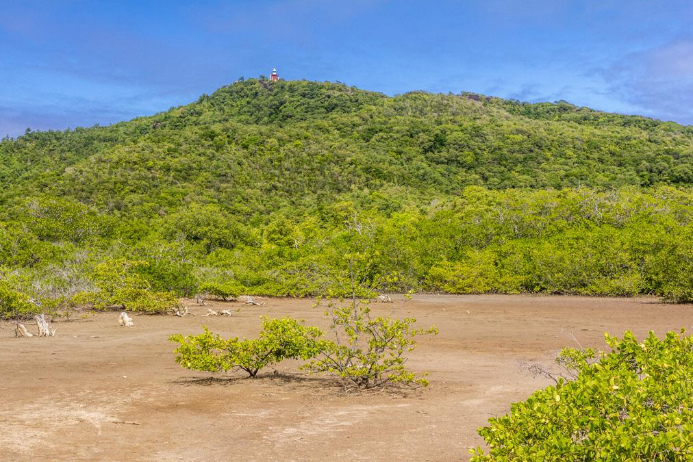 Mangrove de la Presqu'île de la Caravelle en Martinique