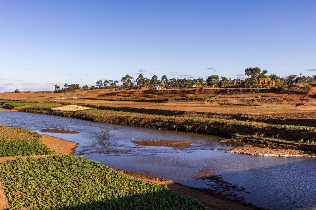 Champs de légumes à Madagascar
