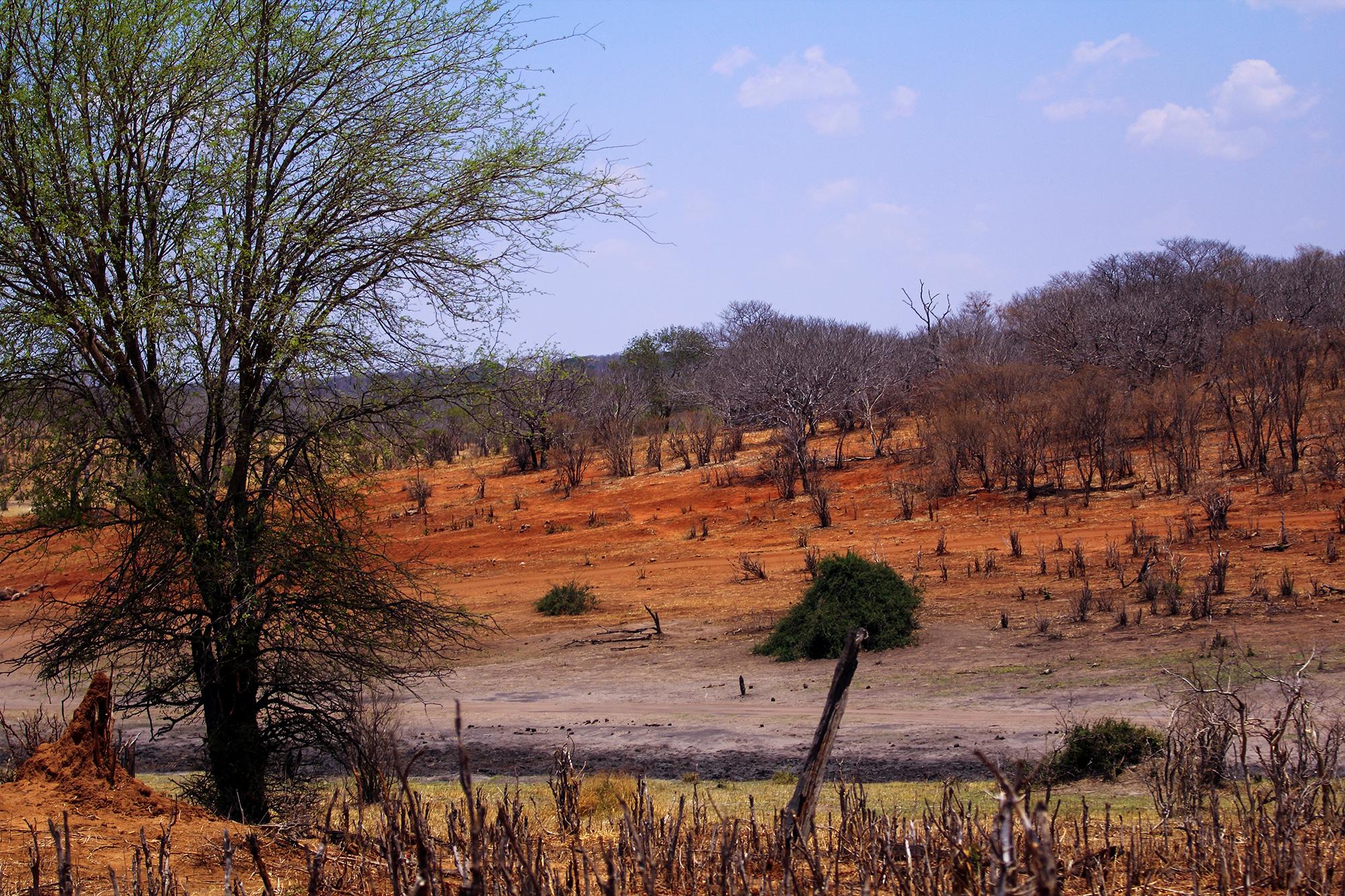 Chobe National Park au Botswana par Guillaume Projetti