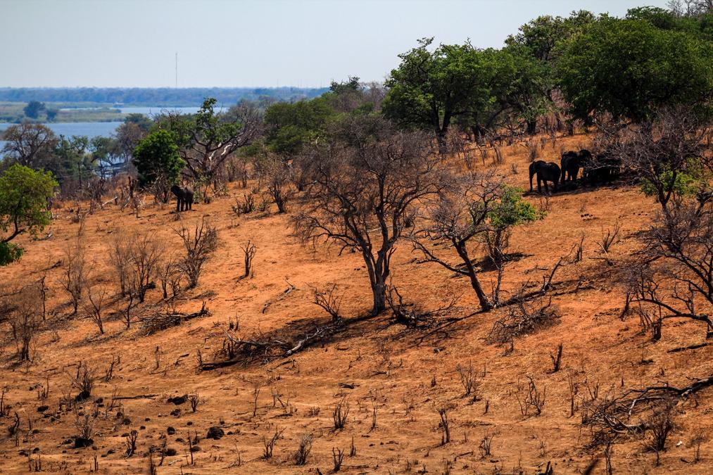 Chobe National Park au Botswana