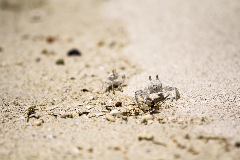 Crabe à Maurice