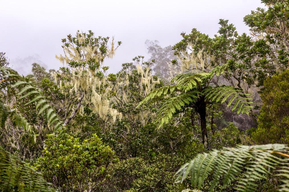 Forêt de Bélouve à la Réunion