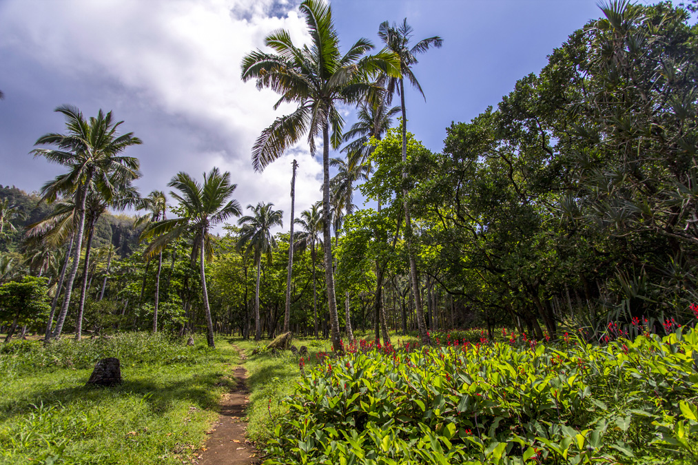 Anse des Cascades à la Réunion