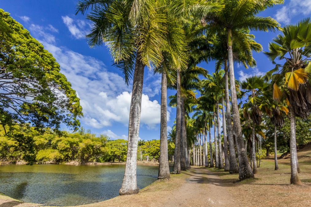 Jardins de l'Habitation Clément en Martinique