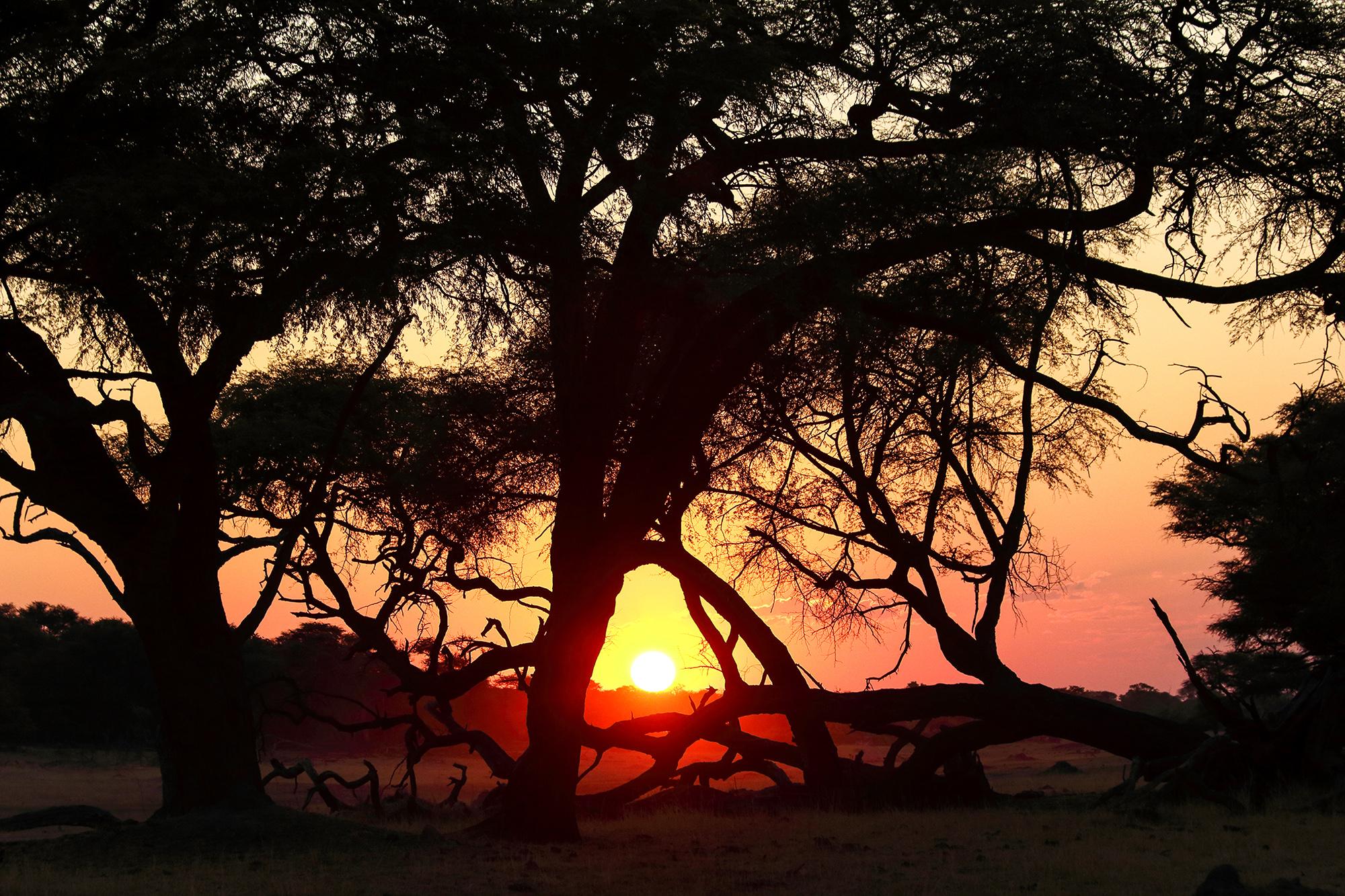 Hwange National Park au Zimbabwe par Guillaume Projetti