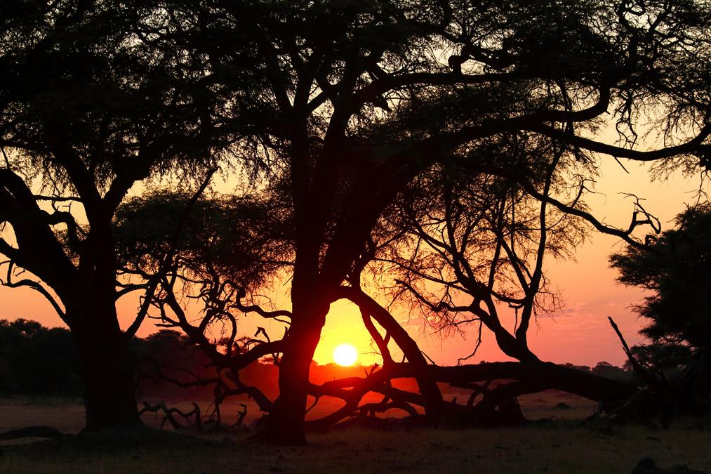 Hwange National Park au Zimbabwe