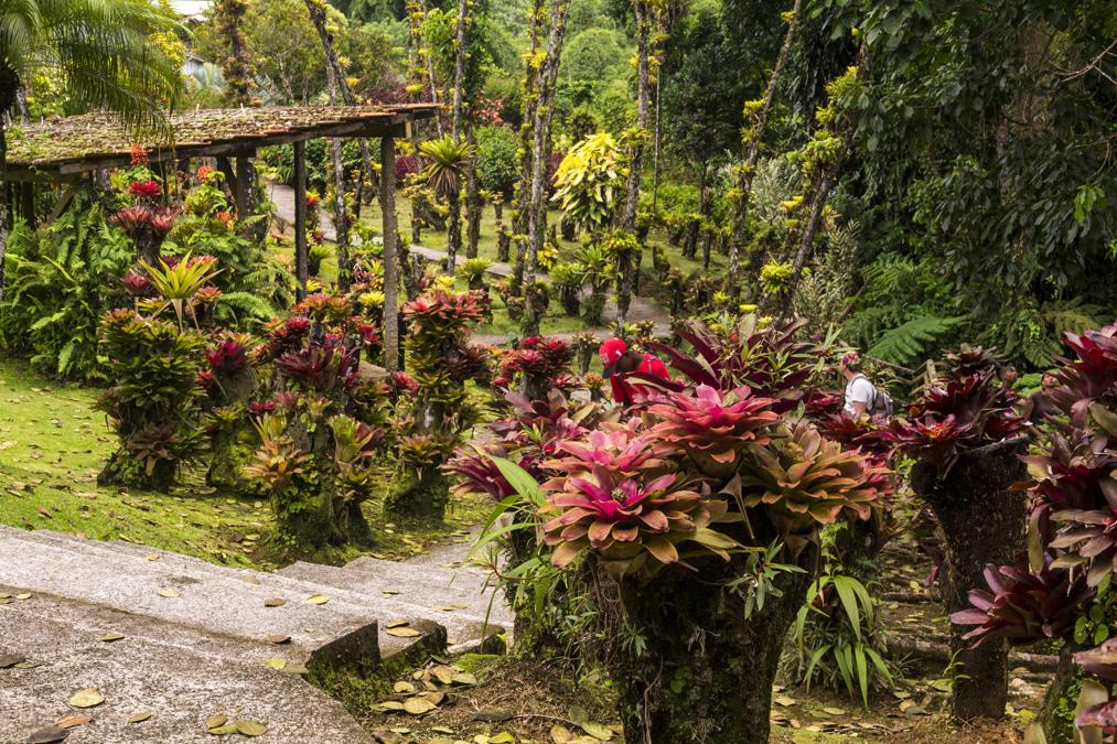 Jardin de Balata en Martinique