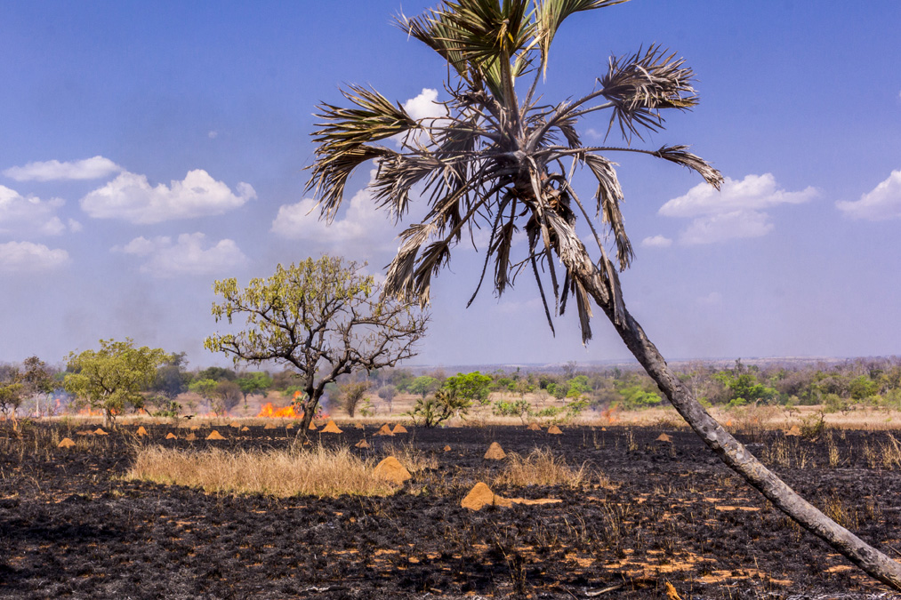 Feu de brousse à Madagascar