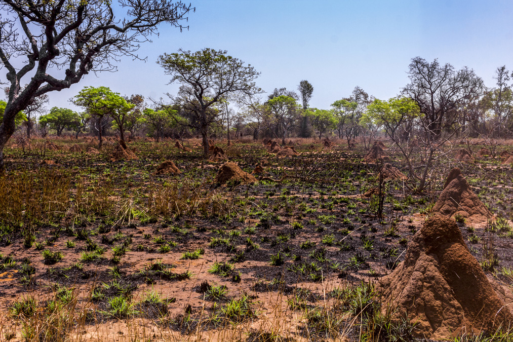 Termitières à Madagascar