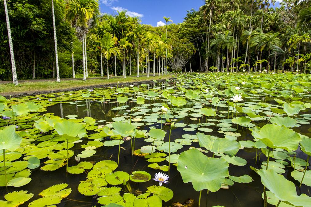 Jardin botanique Sir Seewoosa