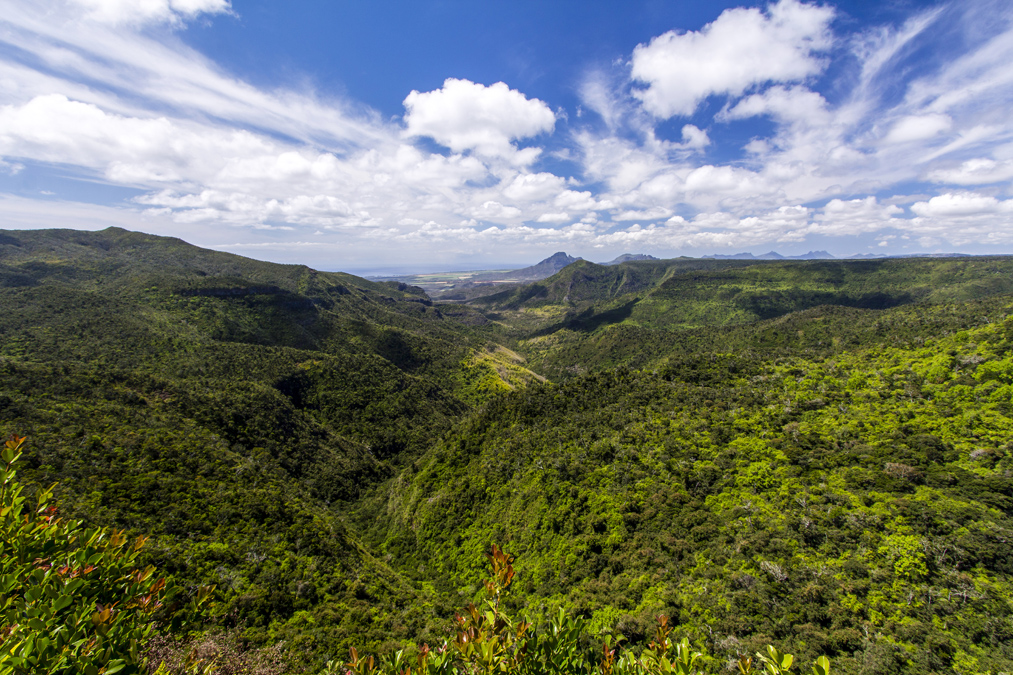 Parc national des gorges de Rivière Noire à Maurice