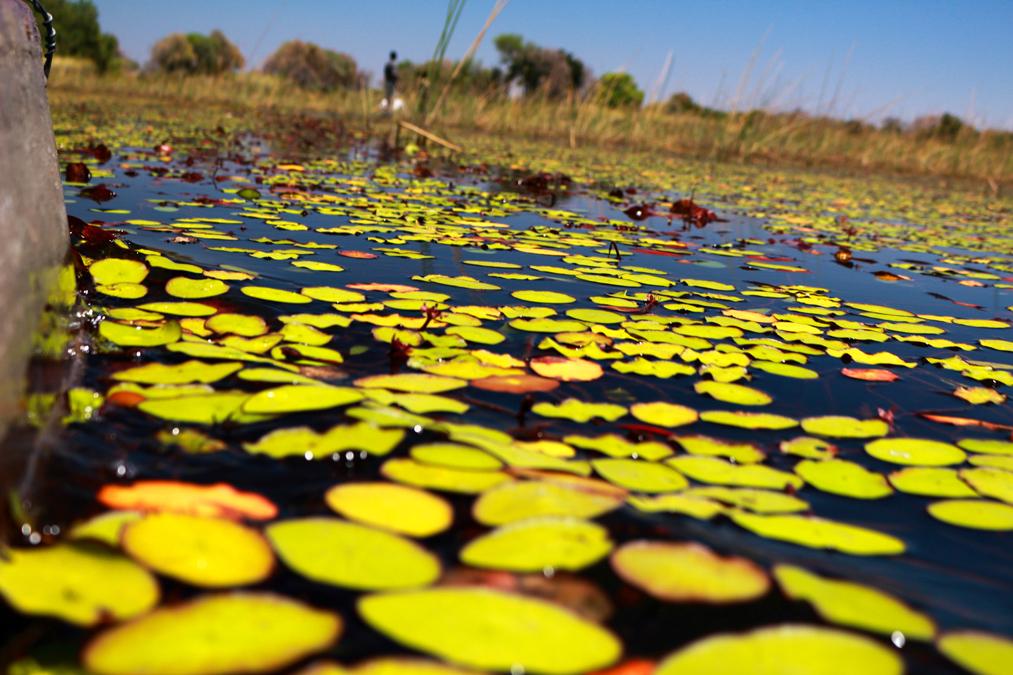 Okavango Delta au Botswana