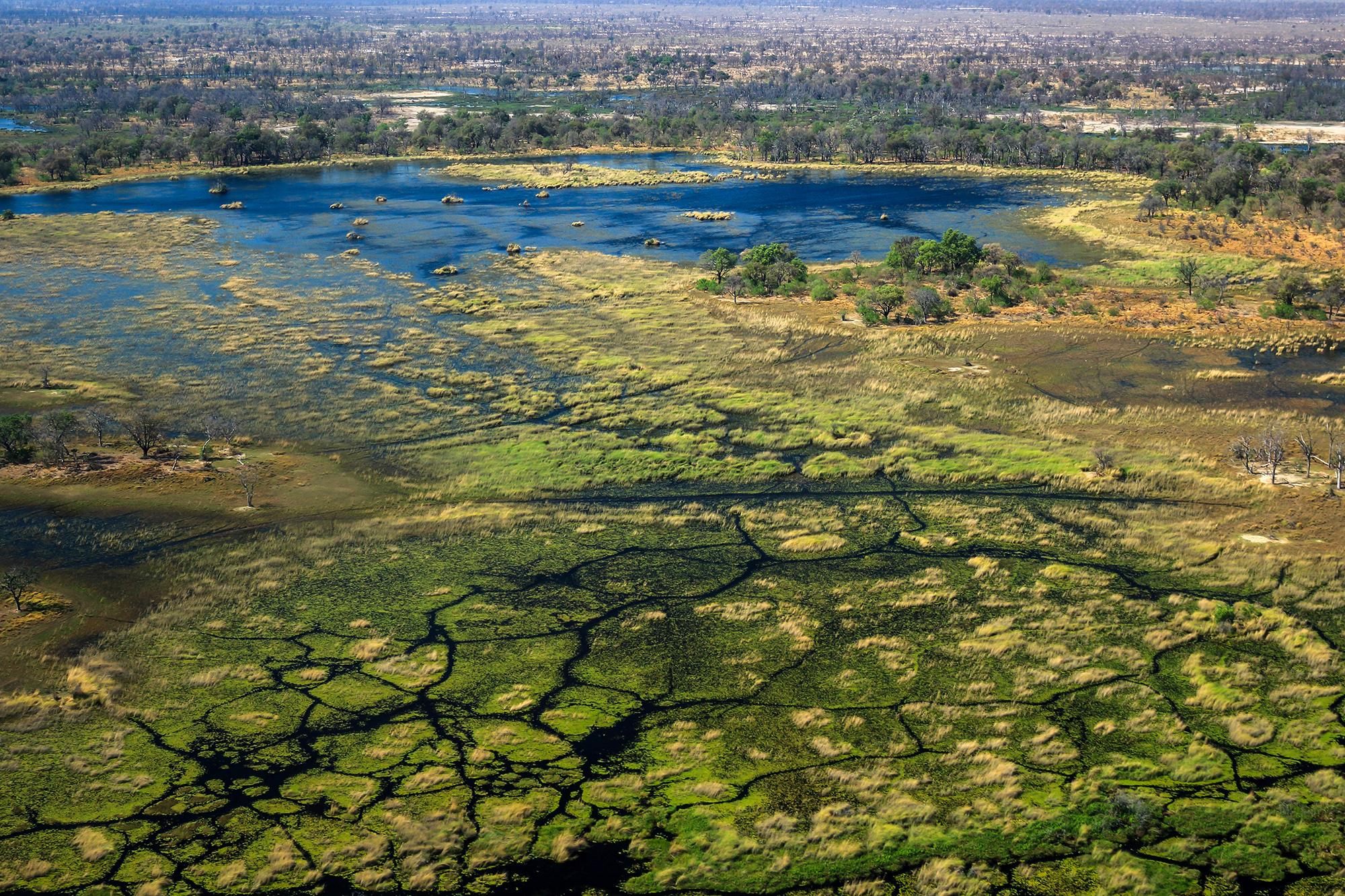 Okavango Delta au Botswana par Guillaume Projetti