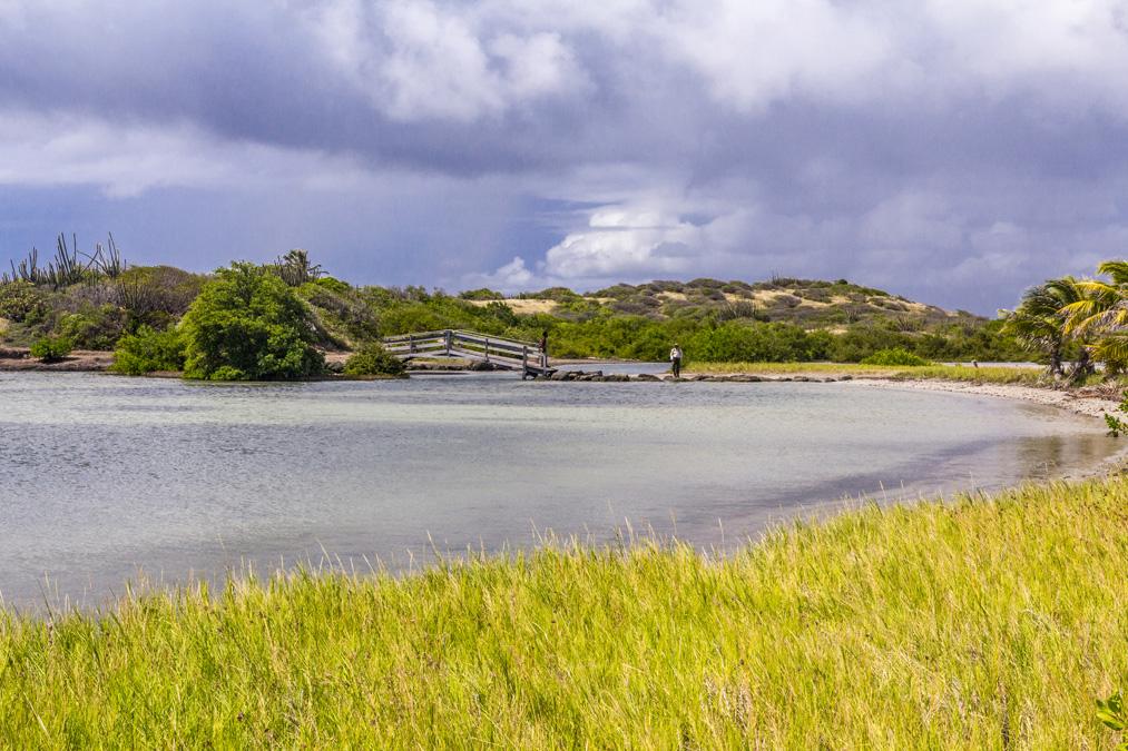 Étang des Salines en Martinique