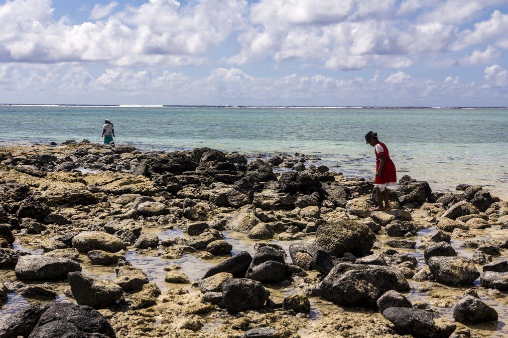 Piqueuse d'ourites à Rodrigues