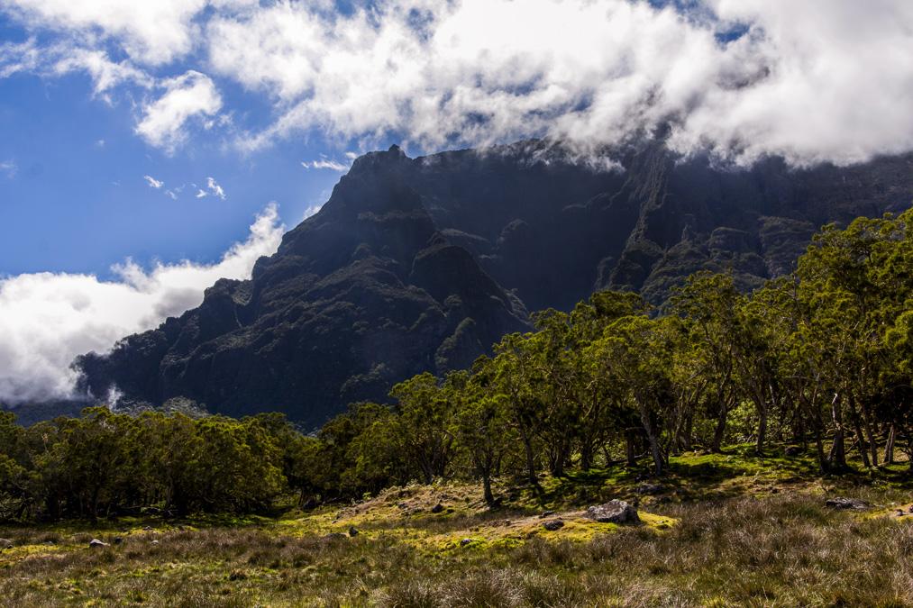 Plaine des Tamarins à la Réunion
