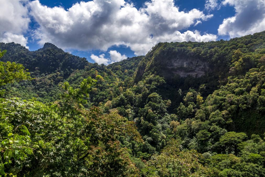 Randonnée le Prêcheur à Grand'Rivière en Martinique