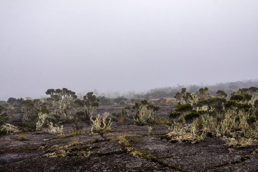 Randonnée de la Roche Écrite à la Réunion