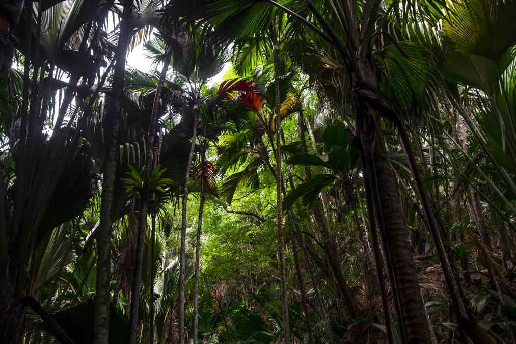 Vallée de Mai (Praslin) aux Seychelles