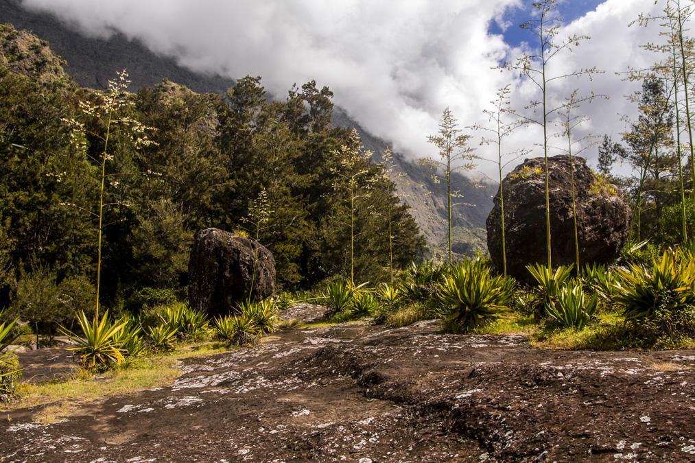 Trois Roches à la Réunion