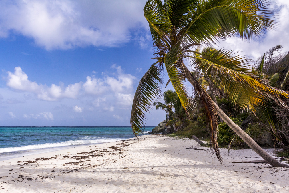 Plage de Jamesby des Tobago Cays aux Grenadines