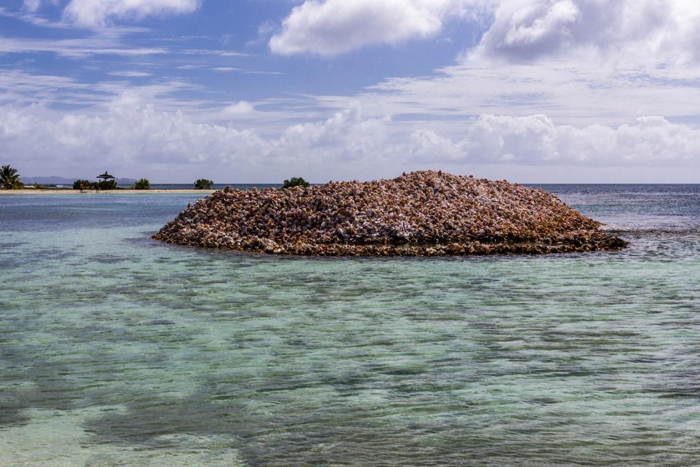 Tas de coquilles de lambis sur l'île Moustique aux Grenadines