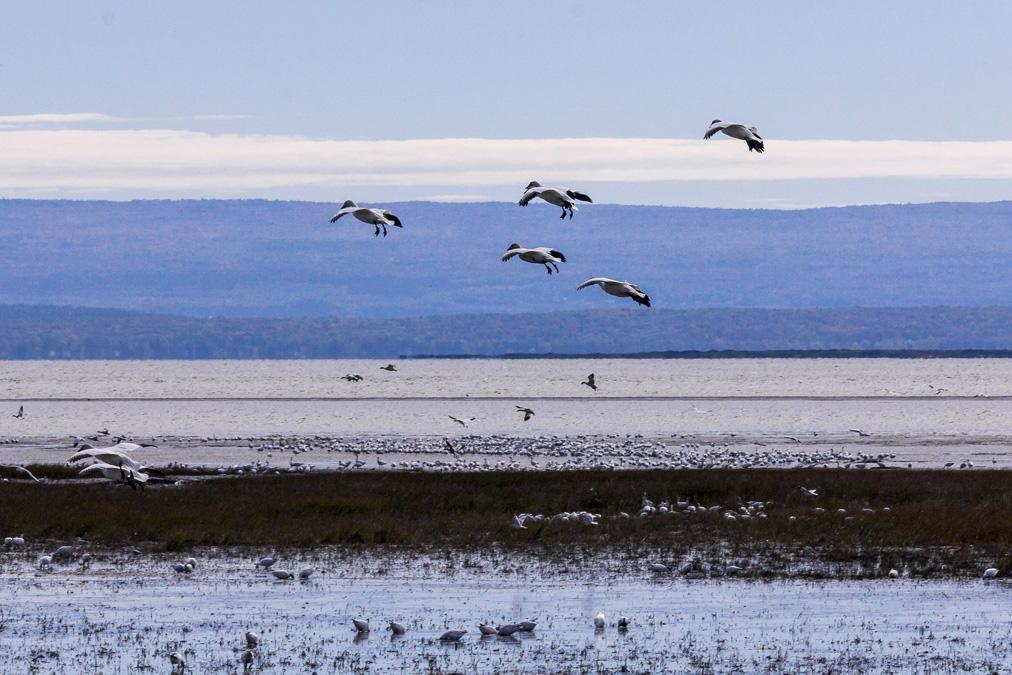 Réserve nationale de faune du Cap-Tourmente au Canada