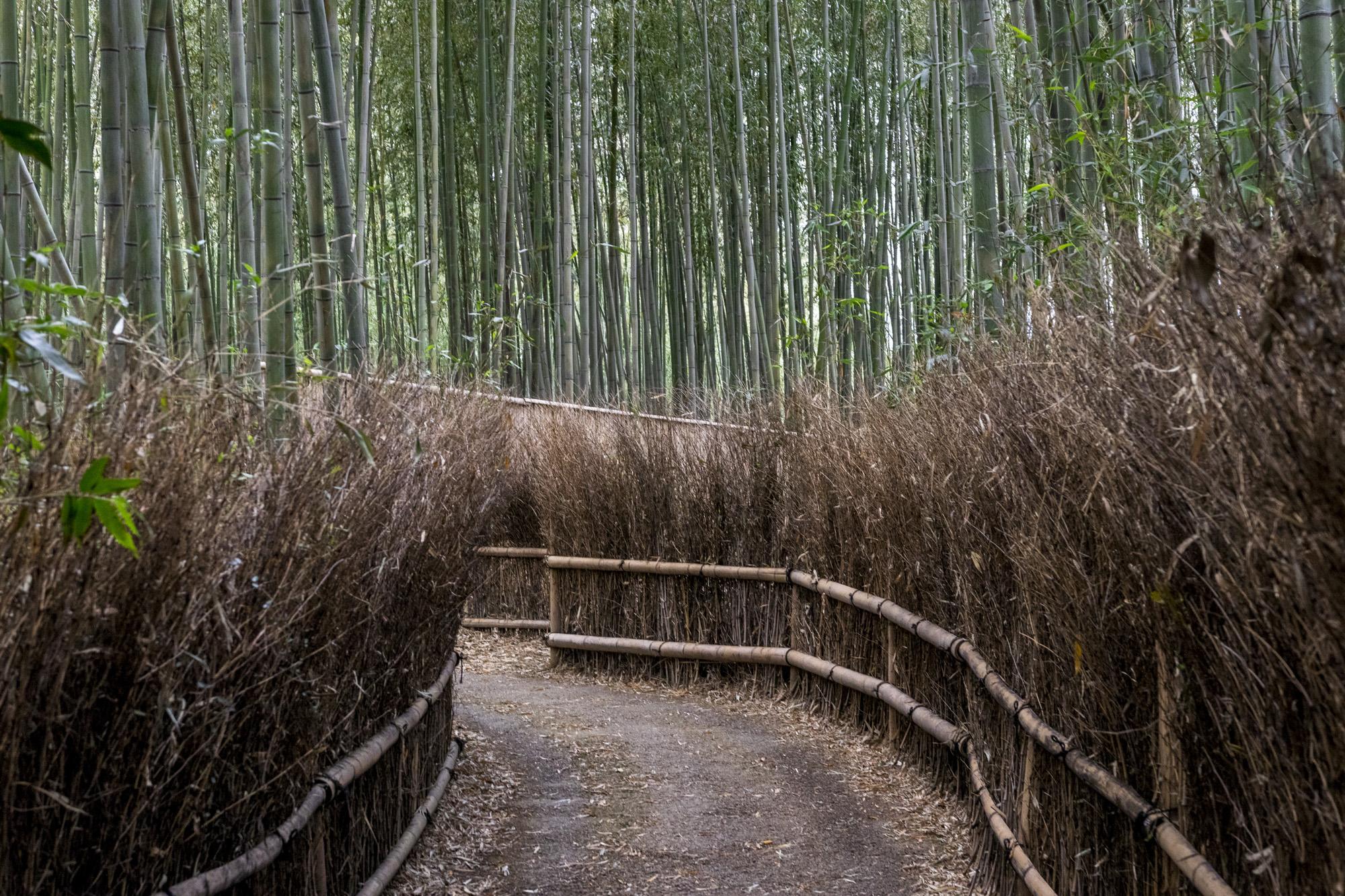 Bambouseraie d'Arashiyama dans la ville de Kyōto au Japon