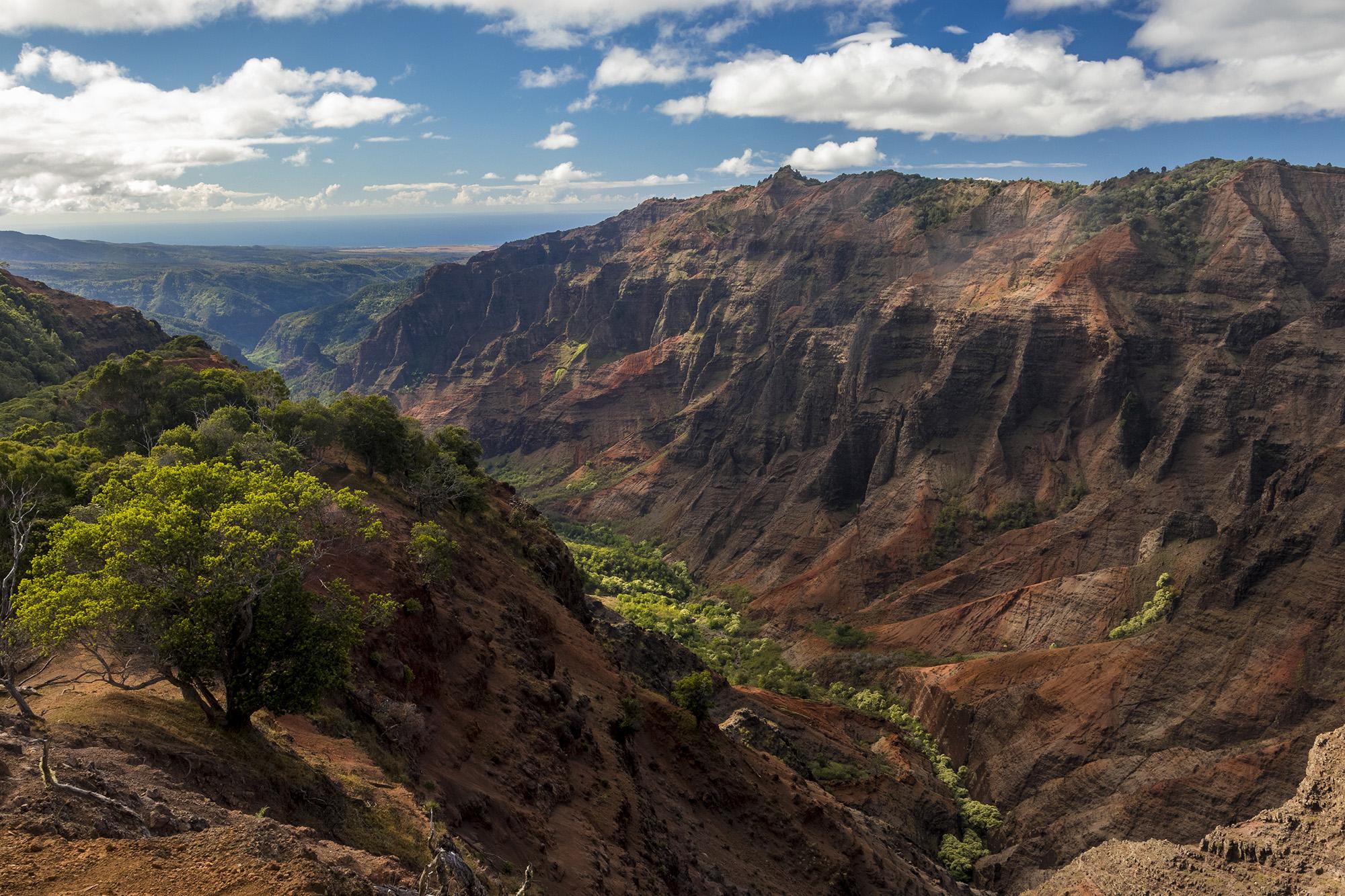 Cliff Trail au Waimea Canyon State Park sur l'île de Kauai de l'archipel de Hawaï