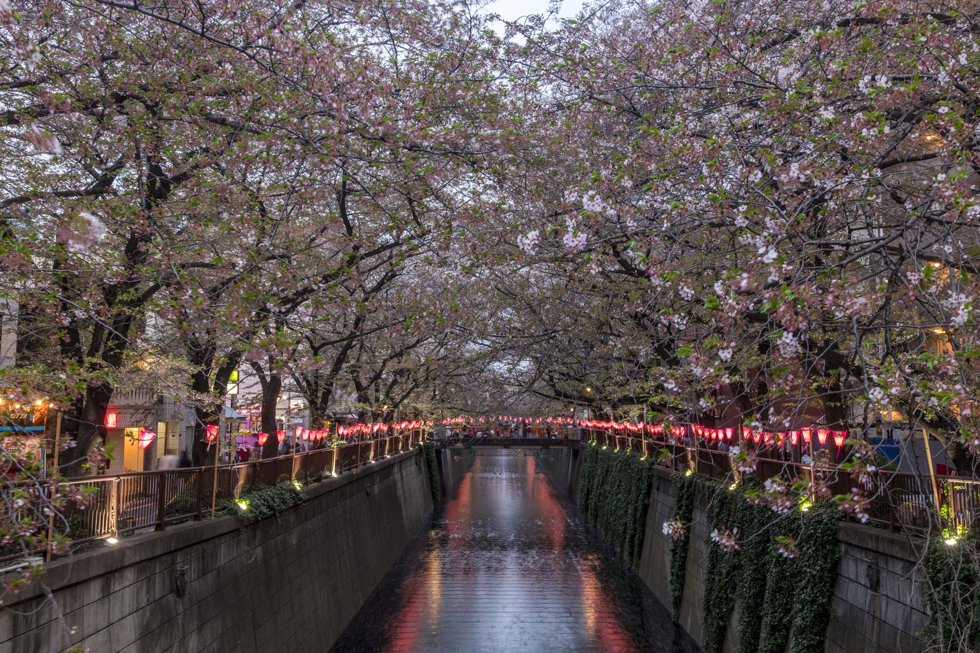 Meguro-gawa dans la ville de Tōkyō au Japon