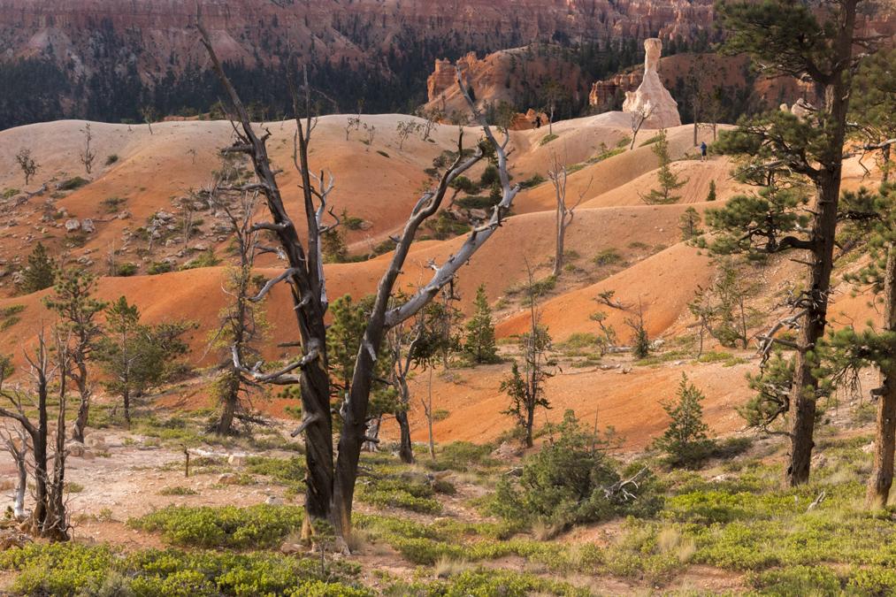 Queen's Garden Trail dans le Bryce Canyon National Park aux Etats-Unis