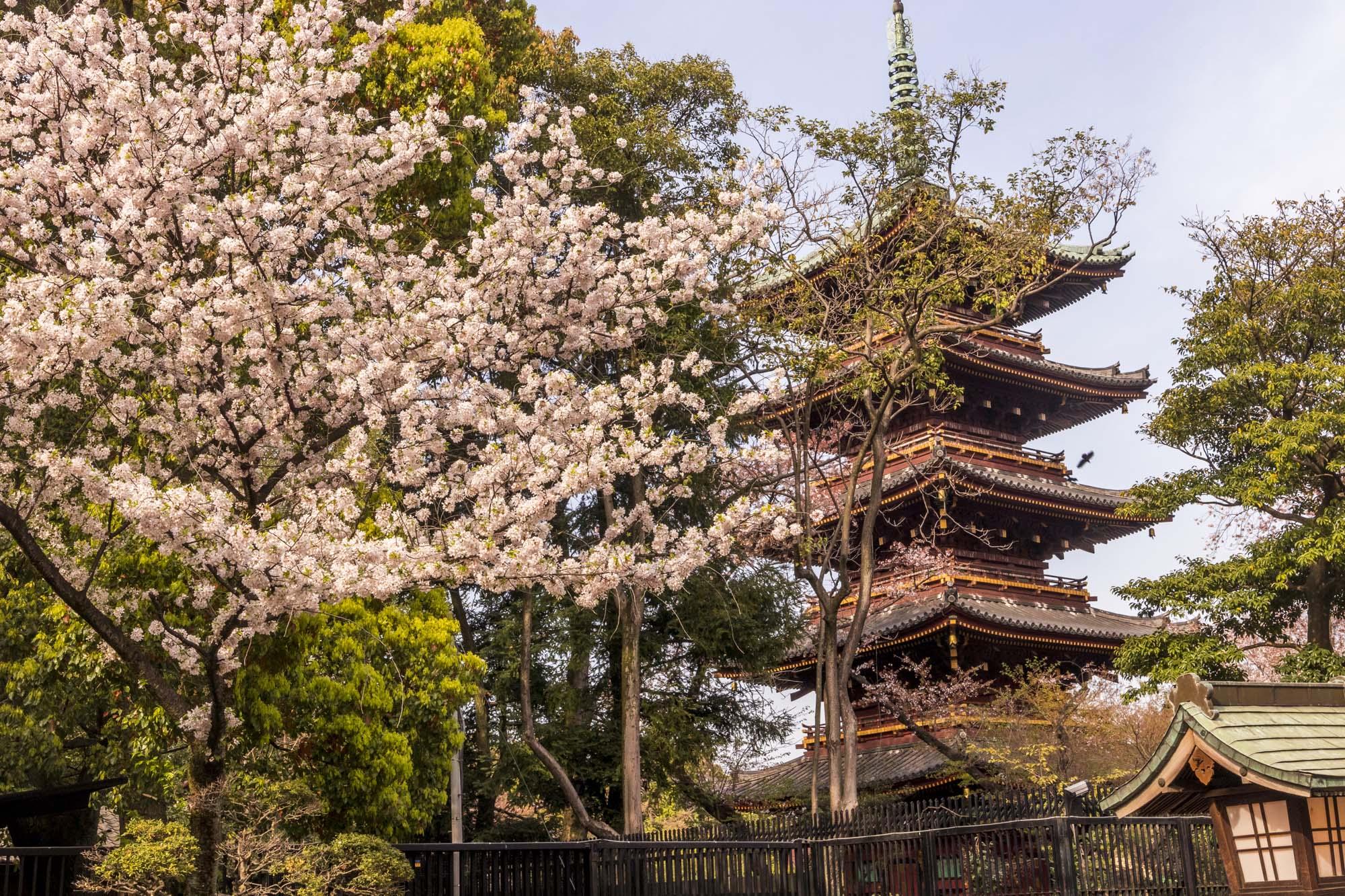 Ueno kōen dans la ville de Tōkyō au Japon