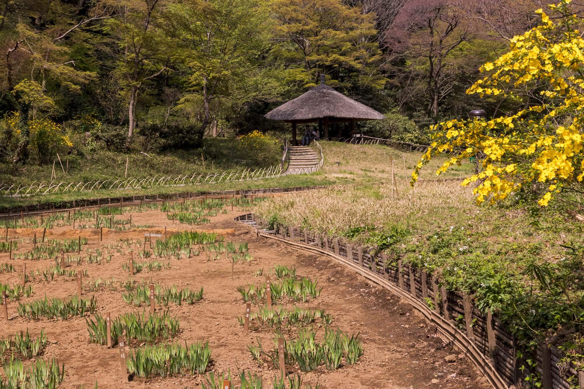 Yoyogi-kôen dans la ville de Tōkyō au Japon